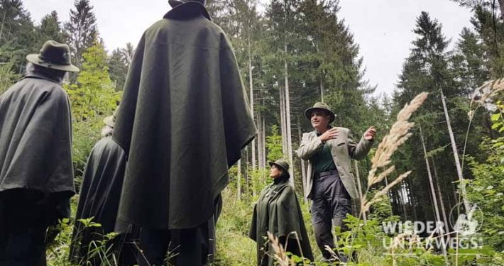 Waldness im Almtal - © Angelika Mandler-Saul Wiederunterwegs