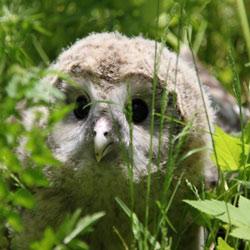 WALDNESS - Waldtiere beobachten